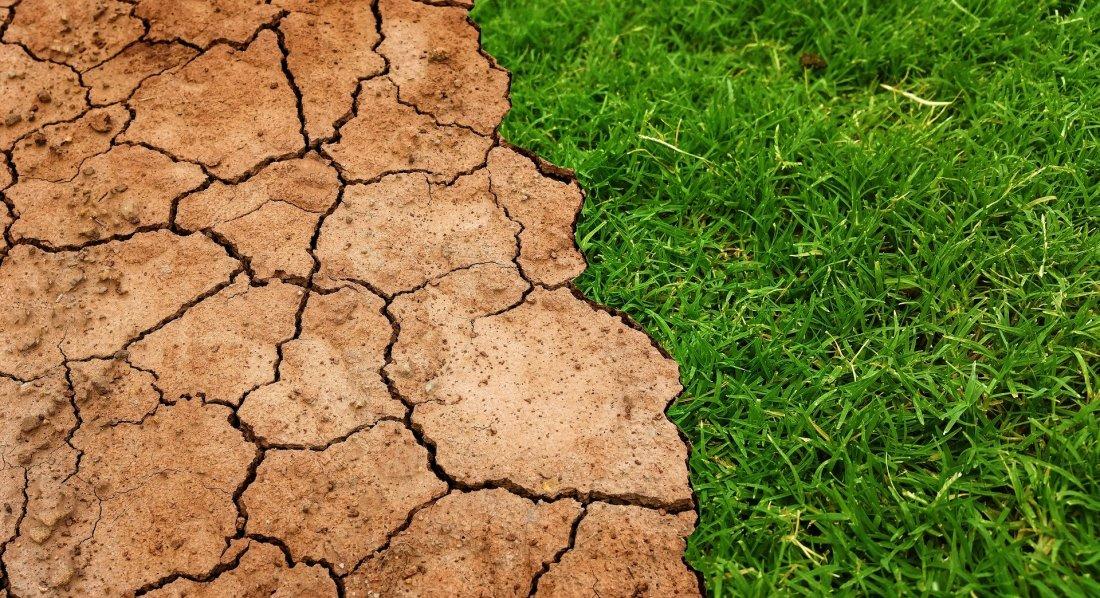 Comment le réchauffement climatique modifie la culture de la vigne ?