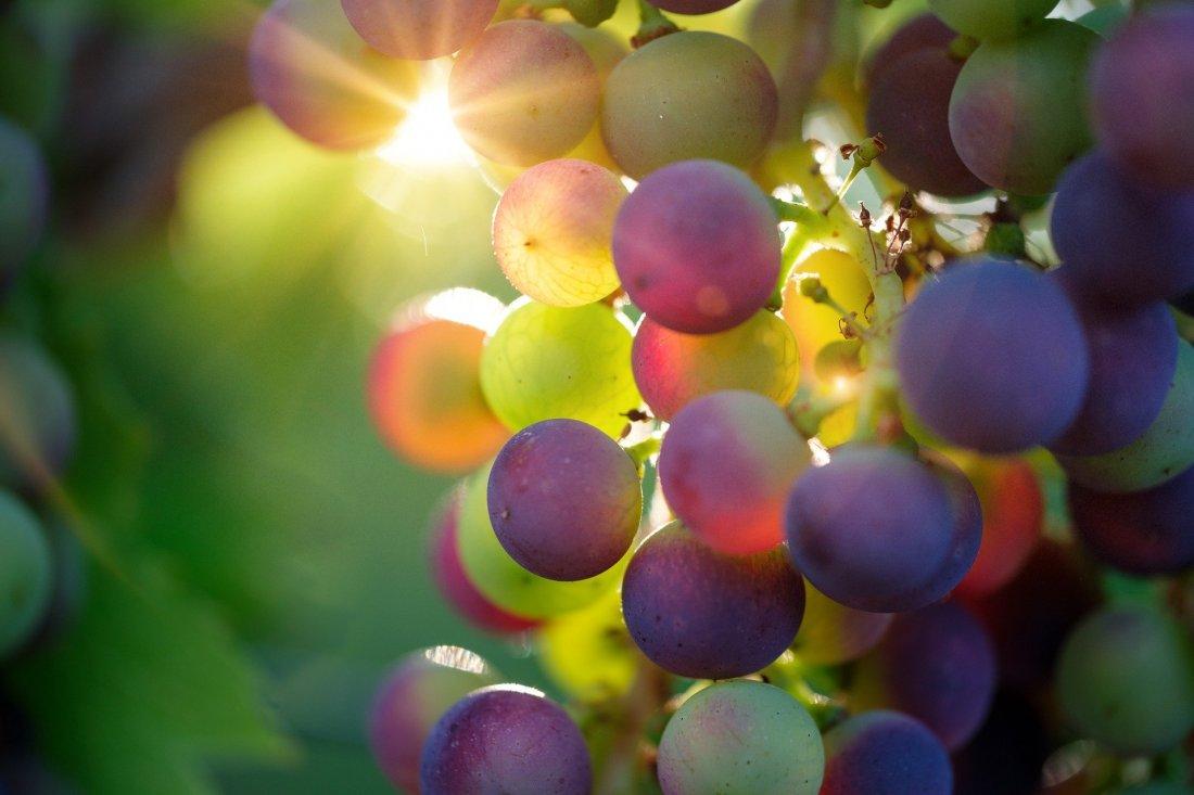 Tout commence avec une grappe de raisin