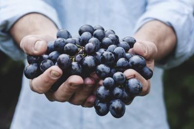 le raisin est la matière première du vin